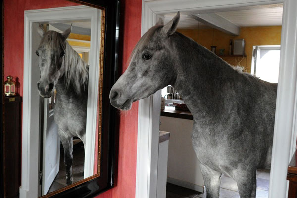 perierga.gr - Άβολος ο στάβλος, το άλογο ζει στο σπίτι!