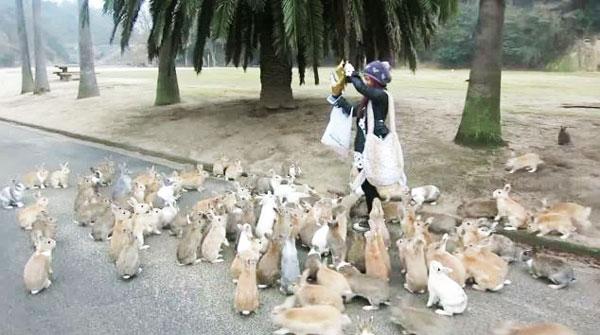 perierga.gr - Ένα νησί γεμάτο κουνέλια