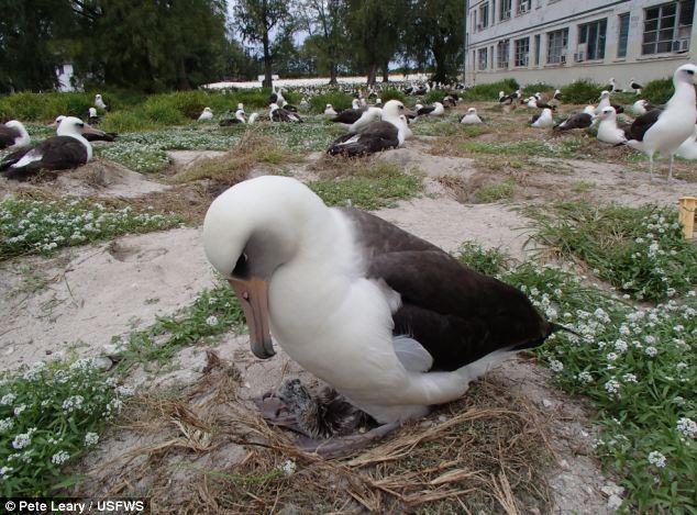 perierga.gr - Ακόμα ένα αβγό για το γηραιότερο άγριο πτηνό!