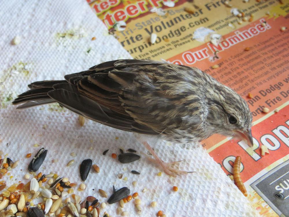 perierga.gr - Η συγκινητική σωτηρία ενός μικρού πτηνού!