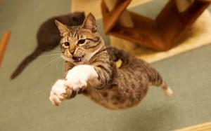 perierga.gr - Γάτες τα κάνουν θάλασσα στα άλματα! (βίντεο)