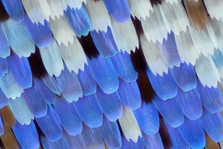 perierga.gr - Φωτογραφίζοντας από πολύ κοντά φτερά πεταλούδων!