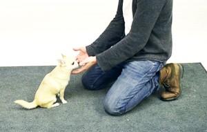 perierga.gr- Πώς αντιδρούν τα σκυλιά σε ένα μαγικό κόλπο; (βίντεο)