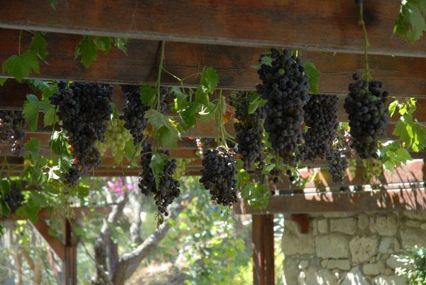 perierga.gr - Huffington Post: 16 διατροφικοί λόγοι που οι Έλληνες ζουν καλύτερα