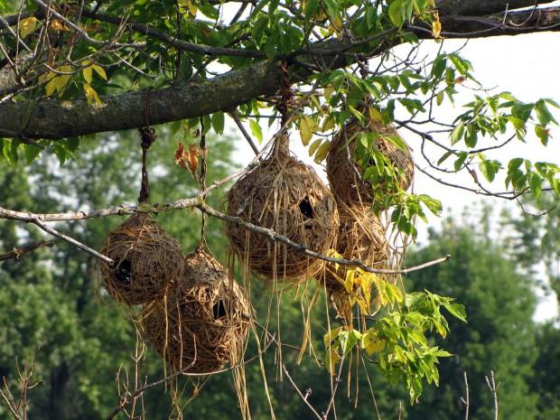 perierga.gr - Πανέμορφες και παράξενες φωλιές πουλιών!