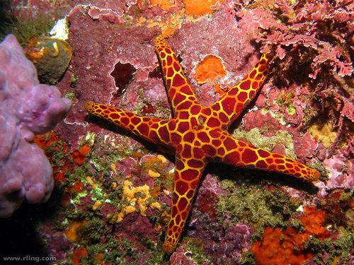 perierga.gr - 15 πανέμορφα θαλάσσια είδη που ζουν στους υφάλους!