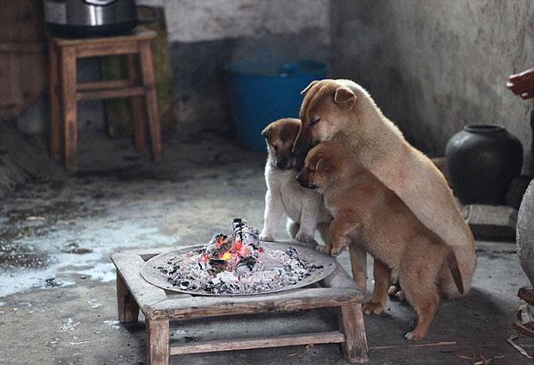 perierga.gr - Αξιαγάπητα κουτάβια ζεσταίνονται μπροστά στη φωτιά!