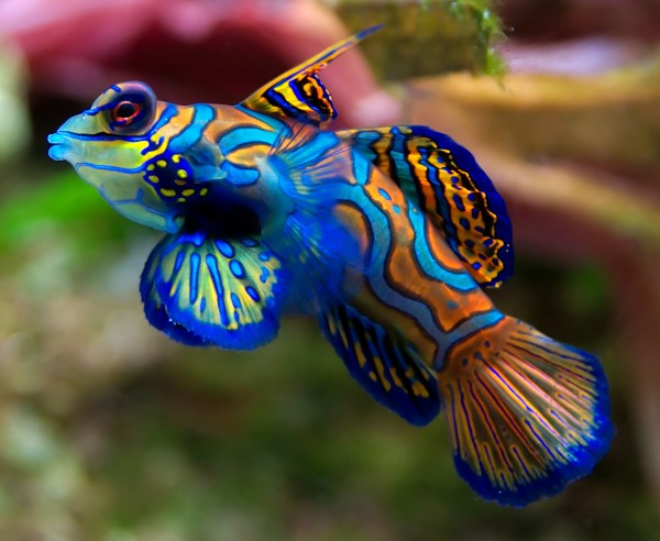 perierga.gr - 10 ψάρια που μοιάζουν... ζωγραφισμένα!