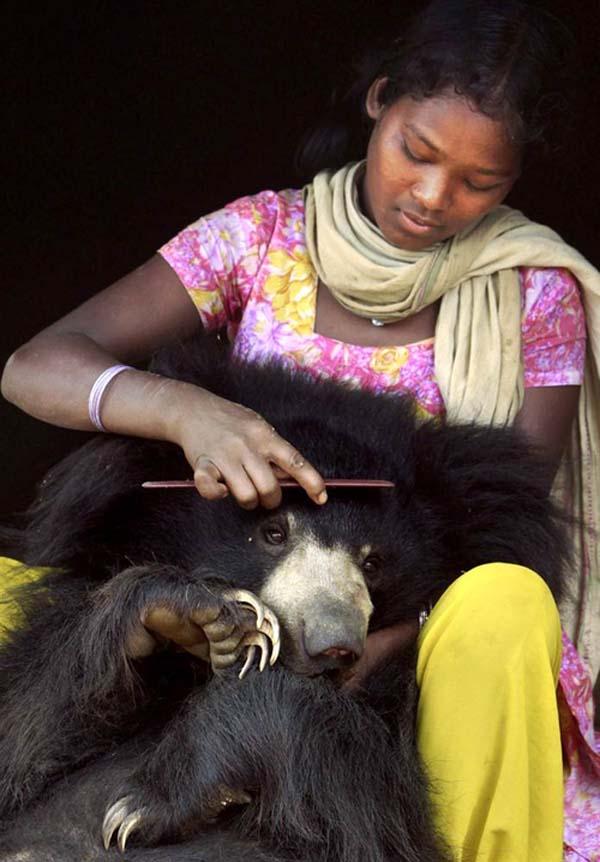 perierga.gr - Αρκουδίτσα ζει ως κατοικίδιο οικογένειας στην Ινδία!