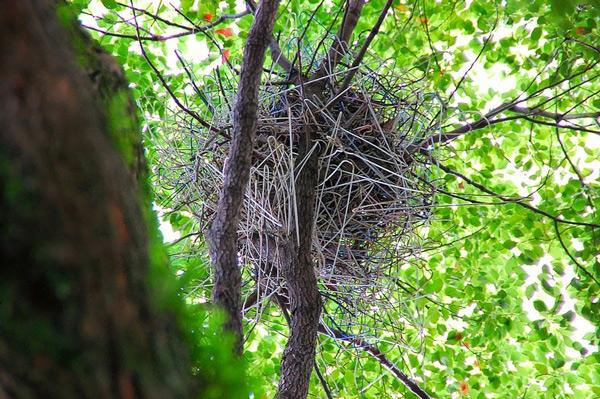 perierga.gr - Τα πουλιά στην πόλη κάνουν φωλιές από... κρεμάστρες!