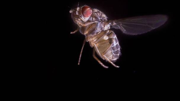 perierga.gr - Οι μύγες κινούνται όπως τα μαχητικά αεροσκάφη!