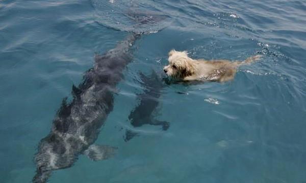 perierga.gr - Η απίστευτη ιστορία ενός σκύλου που ζει με τα δελφίνια!