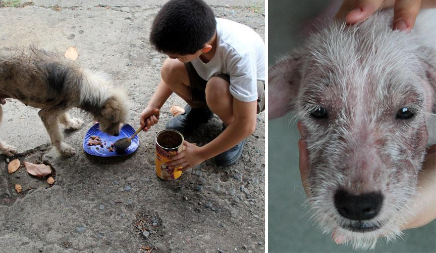 perierga.gr - 9χρονος δημιουργεί το δικό του κέντρο αδέσποτων ζώων!
