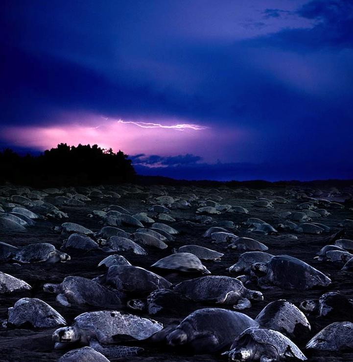 perierga.gr - Θαλάσσιες χελώνες αφήνουν τα αυγά τους στην ακτή!