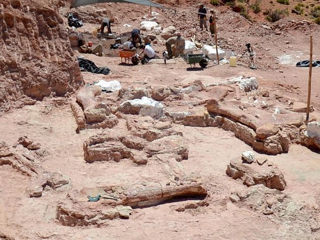 perierga.gr - Ο μεγαλύτερος δεινόσαυρος του κόσμου ανακαλύφθηκε στην Αργεντινή!