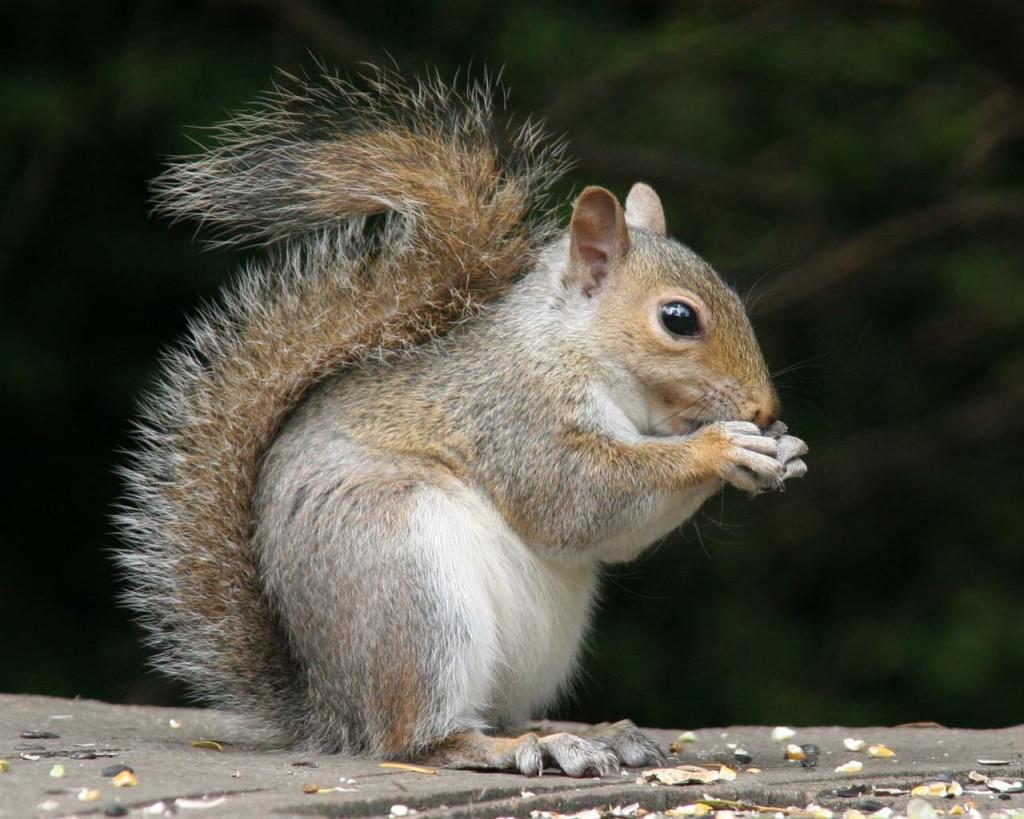 perierga.gr - Τα 10 πιο έξυπνα ζώα του πλανήτη!