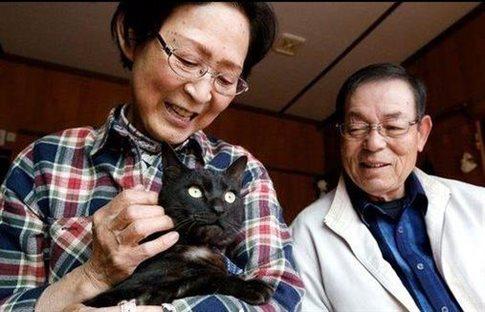 Perierga.gr - Γάτα χαμένη στο τσουνάμι του 2011 επέστρεψε σπίτι