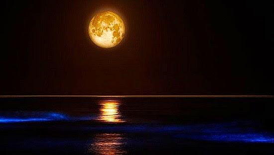 perierga.gr - 5 απίστευτα μέρη στον κόσμο όπου ο ωκεανός... λάμπει!