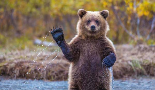 perierga.gr - 10 απίστευτες στιγμές των ζώων στη φύση!
