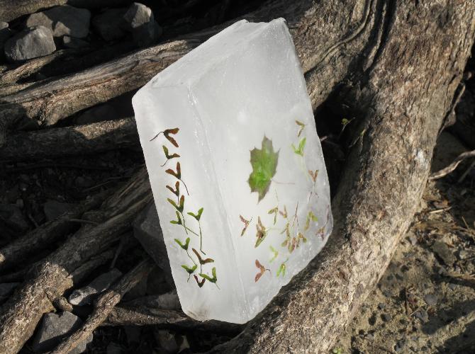 perierga.gr - «Παγωμένα» φυτολόγια ρίχνονται στα ποτάμια!
