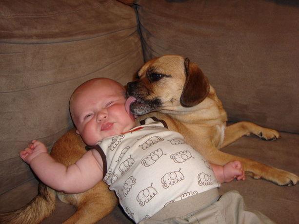 perierga.gr - Αξιαγάπητα παιδάκια φιλάνε τα σκυλιά τους!