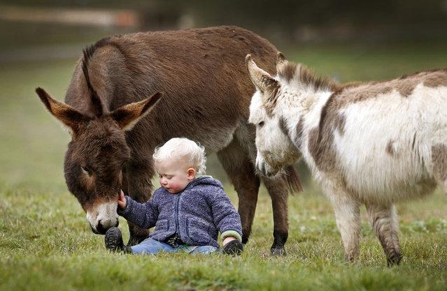 perierga.gr - Μίνι γαϊδουράκια, οι καλύτεροι φίλοι 15μηνου μωρού!