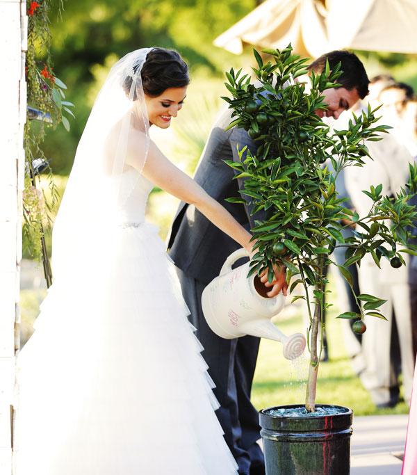 perierga.gr - Θες να παντρευτείς; Φύτεψε πρώτα ένα δέντρο!