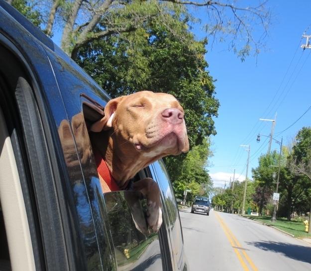perierga.gr - Αδέσποτα ζώα στο δρόμο προς τις νέες τους οικογένειες