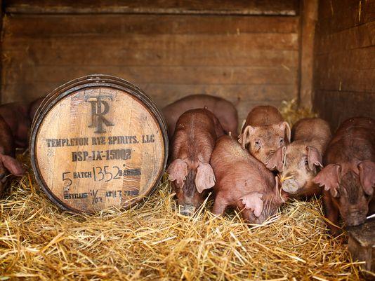 perierga.gr - Επαναστατική γεύση ουίσκι στο χοιρινό κρέας!