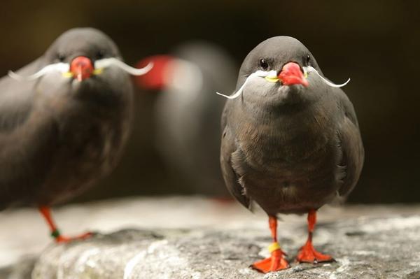 perierga.gr - 10 πτηνά με αστεία εμφάνιση!