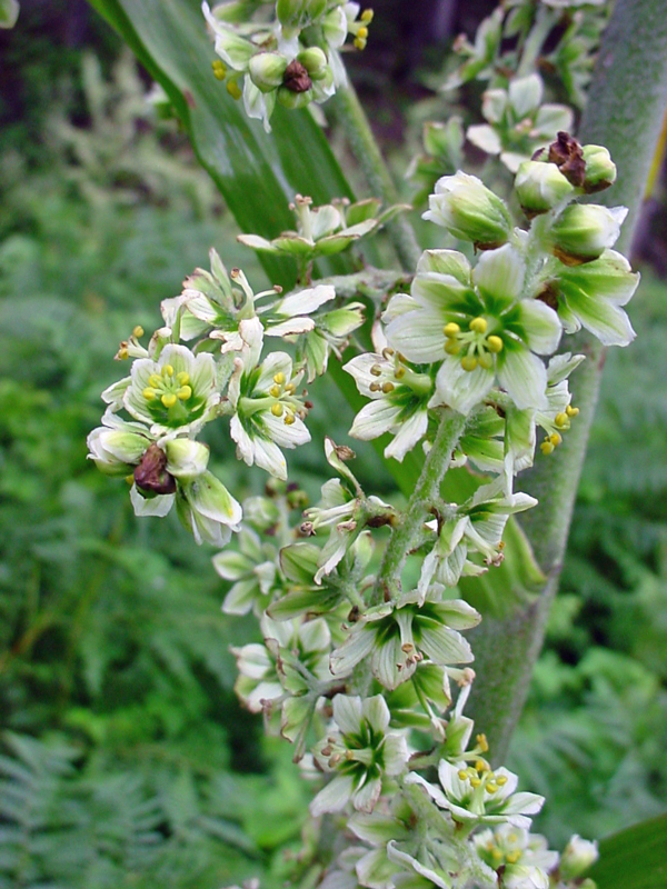 perierga.gr - 10 πανέμορφα αλλά θανατηφόρα ανθοφόρα φυτά!