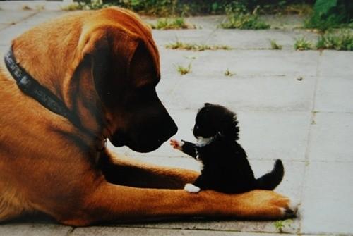 Γάτες δηλώνουν στους σκύλους ότι αυτές είναι το αφεντικό!
