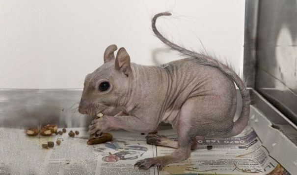 periega.gr - Γνωστά ζώα... δύσκολα αναγνωρίζονται χωρίς τρίχωμα!