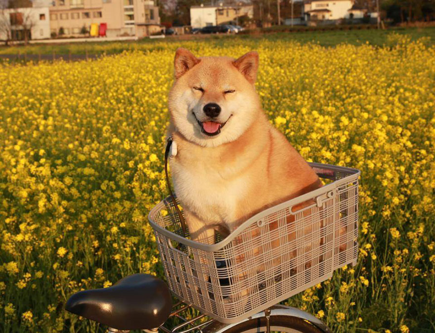 perierga.gr - Ο πιο χαμογελαστός σκύλος στον κόσμο!
