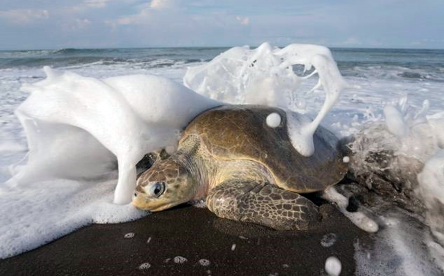 Perierga.gr -  Η... κάθοδος των χελωνών!