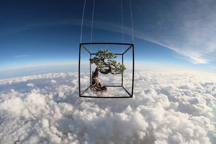 perierga.gr - Mπονσάι ταξιδεύει στο Διάστημα!