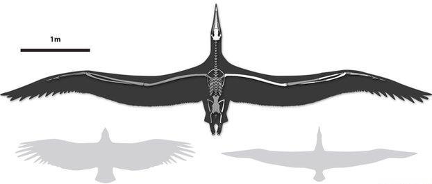 Perierga.gr - To μεγαλύτερο γνωστό πτηνό ήταν σαν μικρό αεροπλάνο