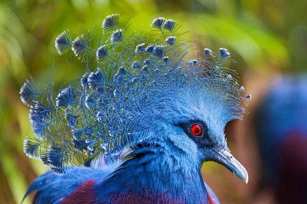 Perierga.gr - 10 πτηνά με εντυπωσιακά λοφία