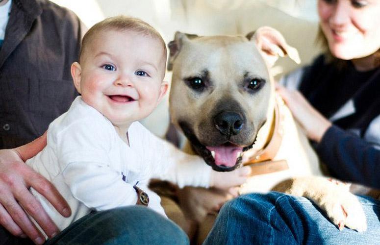 perierga.gr - Σπουδαίοι λόγοι για να έχουμε έναν σκύλο στη ζωή μας!