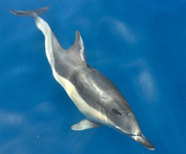 Perierga.gr - Μαγευτικές φωτογραφίες δελφινιών που κολυμπούν