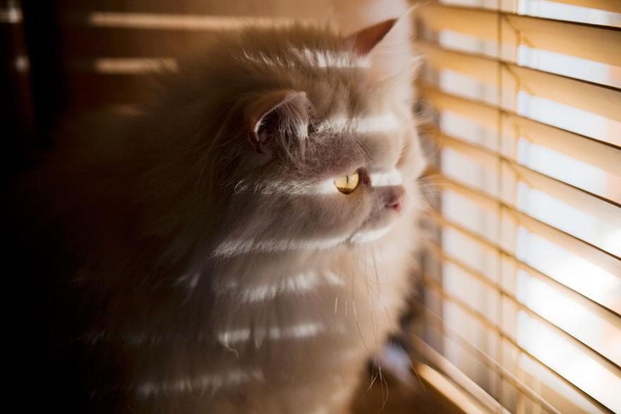 perierga.gr - Θλιμμένες γάτες περιμένουν το αφεντικό τους να γυρίσει!