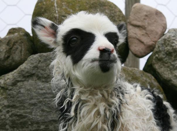 perierga.gr - Απίθανα γενετικά σημάδια σε ζώα που εκπλήσσουν!