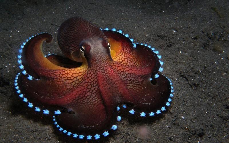 perierga.gr - 15 πλάσματα που φωσφορίζουν στο σκοτάδι!