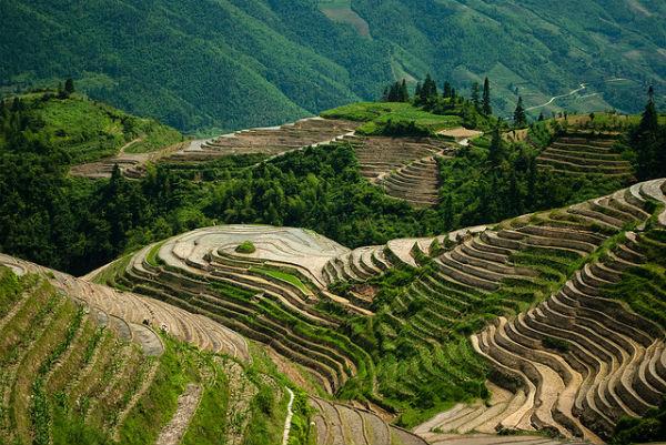 Perierga.gr - Οι εκπληκτικές αναβαθμίδες ρυζιού του  Longsheng
