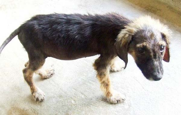 perierga.gr - Ολική επαναφορά αδέσποτων ζώων!