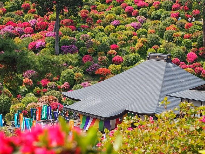 perierga.gr - Το εντυπωσιακό πάρκο με τις αζαλέες
