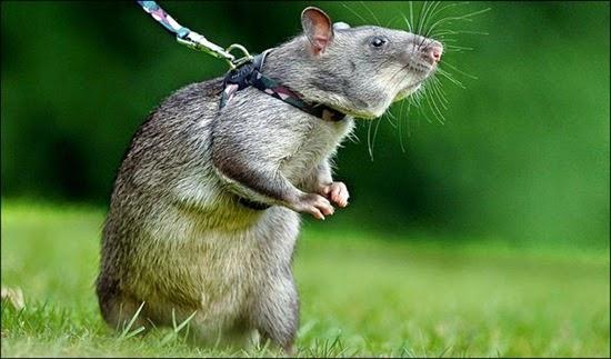 perierga.gr - 10 απίθανες δουλειές που έχουν ανατεθεί σε ζώα!