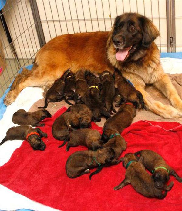 tilestwra.gr - Mανούλες με τα μωρά τους από το ζωικό βασίλειο θα σας κλέψουν την καρδιά!