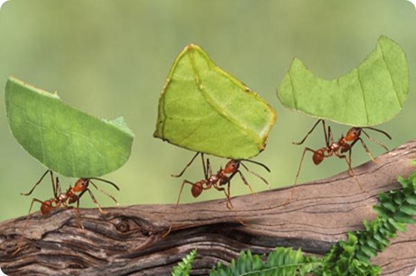 Perierga.gr - Πολλά μυρμήγκια, πιο... δροσερό κλίμα