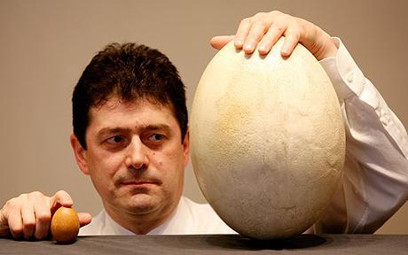 perierga.gr - Το μεγαλύτερο αβγό του κόσμου